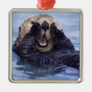 NA, USA, Alaska. Sea otters are the largest Square Metal Christmas Ornament