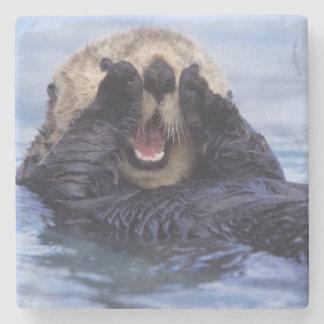 NA, USA, Alaska. Sea otters are the largest Stone Coaster