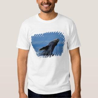 NA, USA, Alaska, Southeast Alaska, Inside Shirt