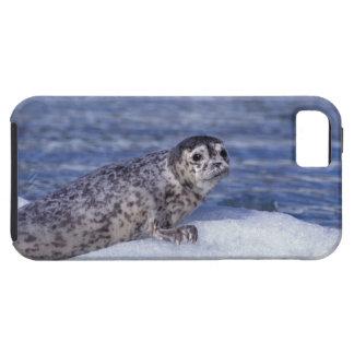 NA, USA, Alaska, Southeast Alaska, Le Conte iPhone SE/5/5s Case