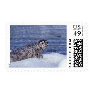 NA, USA, Alaska, Southeast Alaska, Le Conte Stamp