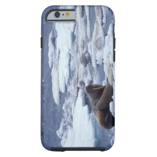 NA, USA, Alaska, Walrus and young on ice in Tough iPhone 6 Case