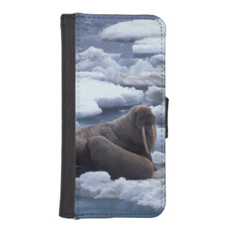 NA, USA, Alaska, Walrus and young on ice in Phone Wallet Case