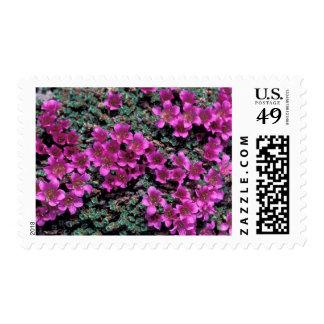 NA, USA, Alaska, Wildflowers Postage Stamp