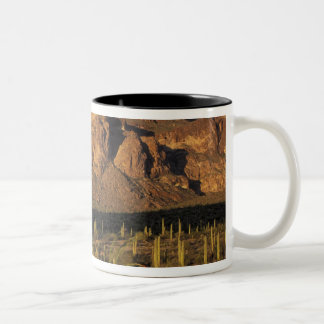 NA, USA, Arizona. Organ Pipe Cactus National 2 Two-Tone Coffee Mug