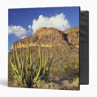 NA, USA, Arizona. Organ Pipe Cactus National 3 3 Ring Binder
