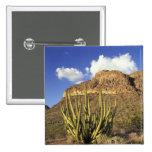 NA, USA, Arizona. Organ Pipe Cactus National 3 2 Inch Square Button