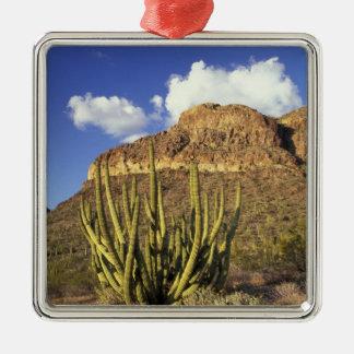 NA, USA, Arizona. Organ Pipe Cactus National 3 Metal Ornament