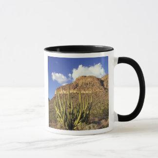 NA, USA, Arizona. Organ Pipe Cactus National 3 Mug