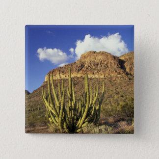 NA, USA, Arizona. Organ Pipe Cactus National 3 Pinback Button