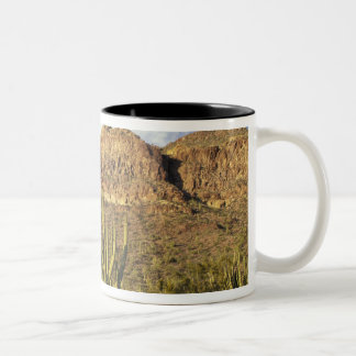 NA, USA, Arizona. Organ Pipe Cactus National 3 Two-Tone Coffee Mug