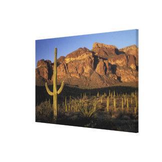 NA, USA, Arizona. Organ Pipe Cactus National Canvas Print