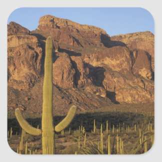 NA, USA, Arizona. Organ Pipe Cactus National Square Sticker