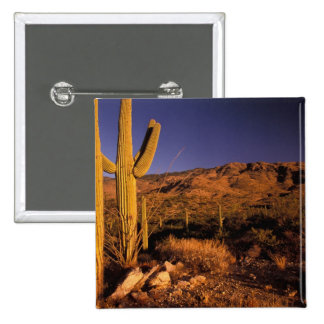 NA USA Arizona Saguaro National Monument Button