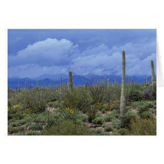 NA USA Arizona Saguaro National Monument Greeting Card