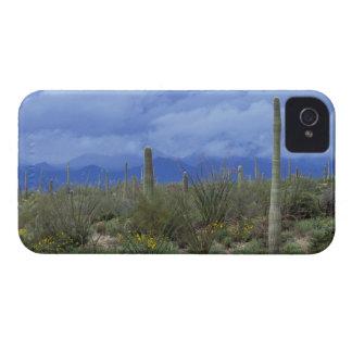 NA USA Arizona Saguaro National Monument Blackberry Bold Cases