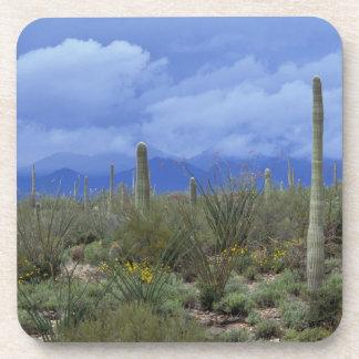 NA USA Arizona Saguaro National Monument Beverage Coaster