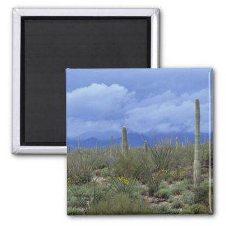 NA USA Arizona Saguaro National Monument Refrigerator Magnet