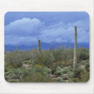 NA USA Arizona Saguaro National Monument Mousepads