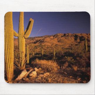 NA USA Arizona Saguaro National Monument Mousepad