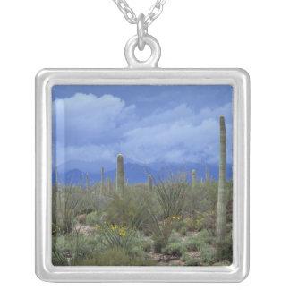 NA USA Arizona Saguaro National Monument Necklaces
