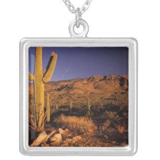 NA USA Arizona Saguaro National Monument Pendants