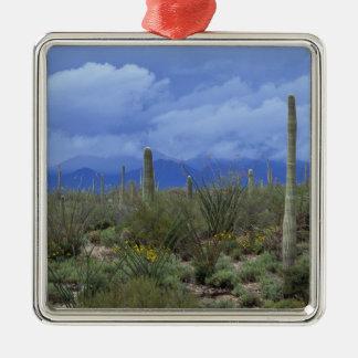 NA USA Arizona Saguaro National Monument Ornament
