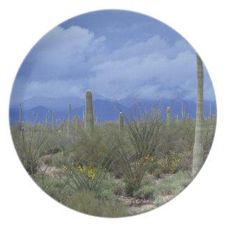 NA USA Arizona Saguaro National Monument Plates