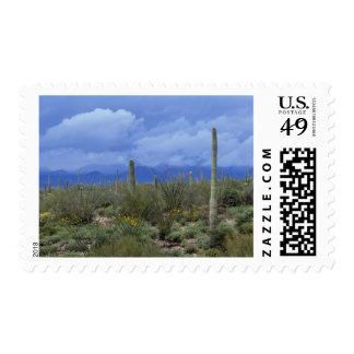 NA USA Arizona Saguaro National Monument Postage Stamp