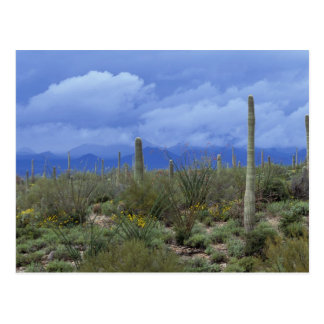 NA, USA, Arizona, Saguaro National Monument, Postcard