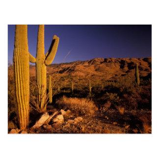 NA USA Arizona Saguaro National Monument Post Cards