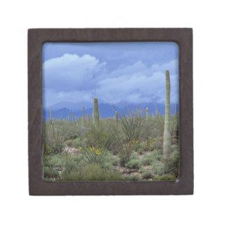 NA USA Arizona Saguaro National Monument Premium Jewelry Boxes