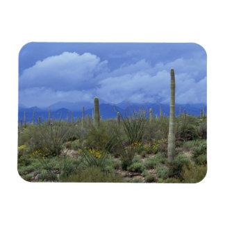 NA USA Arizona Saguaro National Monument Flexible Magnets