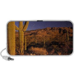 NA, USA, Arizona, Saguaro National Monument, Speaker System