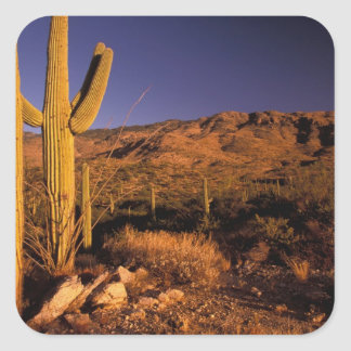 NA USA Arizona Saguaro National Monument Square Sticker