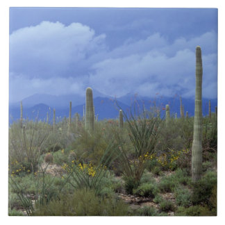 NA USA Arizona Saguaro National Monument Tiles