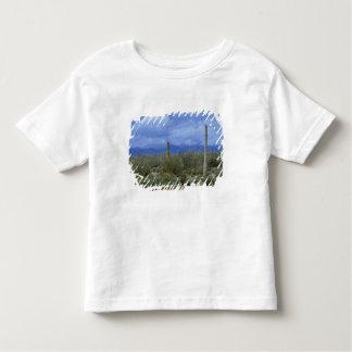 NA, USA, Arizona, Saguaro National Monument, Toddler T-shirt