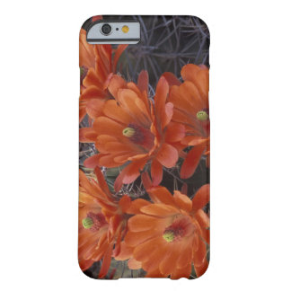 NA, USA, Arizona, San Xavier. Claret Cup cactus Barely There iPhone 6 Case