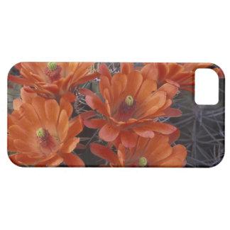 NA, USA, Arizona, San Xavier. Claret Cup cactus iPhone SE/5/5s Case