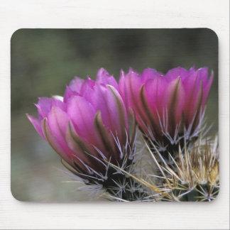 NA, USA, Arizona, Sonoran Desert. Hedgehog Mouse Pad