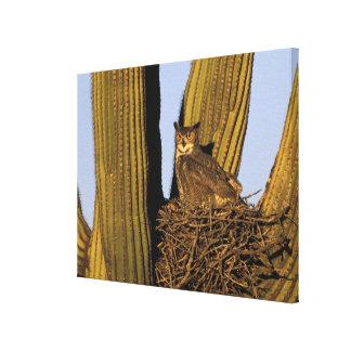 NA, USA, Arizona, Tucson. Great horned owl on Canvas Print