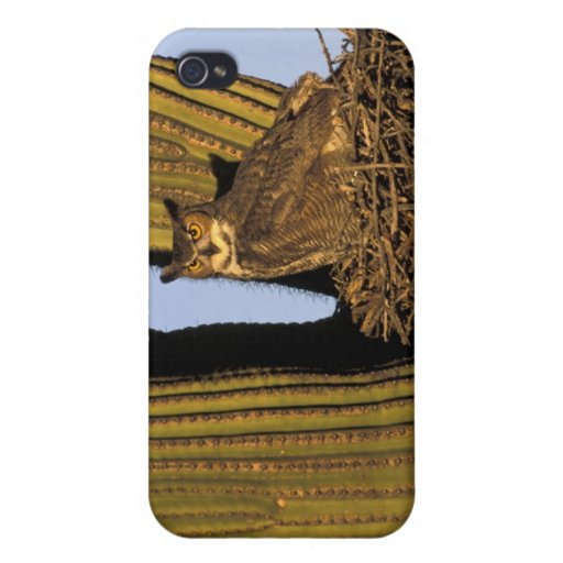 NA, USA, Arizona, Tucson. Great horned owl on Cover For iPhone 4