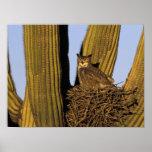 NA, USA, Arizona, Tucson. Great horned owl on Poster