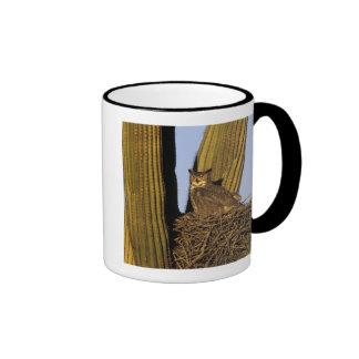 NA, USA, Arizona, Tucson. Great horned owl on Ringer Mug