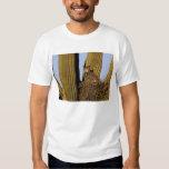 NA, USA, Arizona, Tucson. Great horned owl on T-Shirt