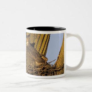 NA, USA, Arizona, Tucson. Great horned owl on Two-Tone Coffee Mug