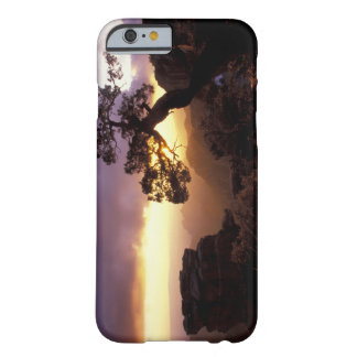 NA, USA, Arizona, Tucson, Sunset and lone Barely There iPhone 6 Case