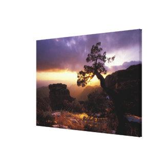 NA, USA, Arizona, Tucson, Sunset and lone Canvas Print