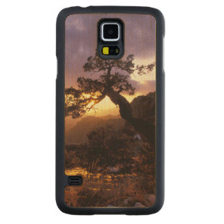 NA, USA, Arizona, Tucson, Sunset and lone Carved Maple Galaxy S5 Slim Case