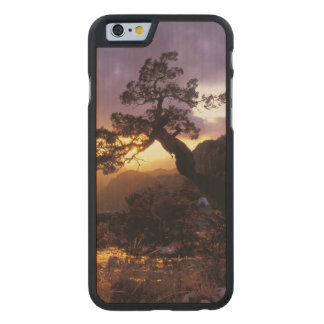 NA, USA, Arizona, Tucson, Sunset and lone Carved Maple iPhone 6 Slim Case